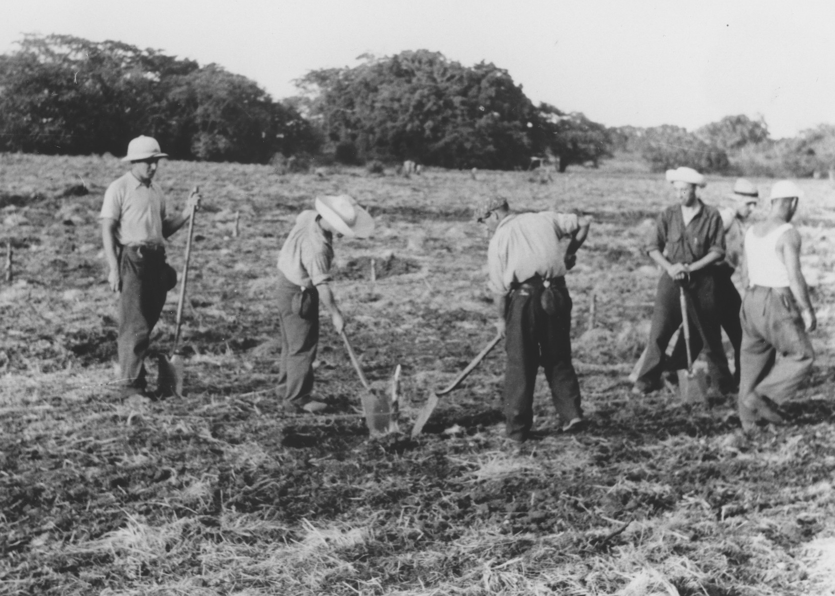 Jewish refugees at work in the fields of the Sosua agricultural settlement.