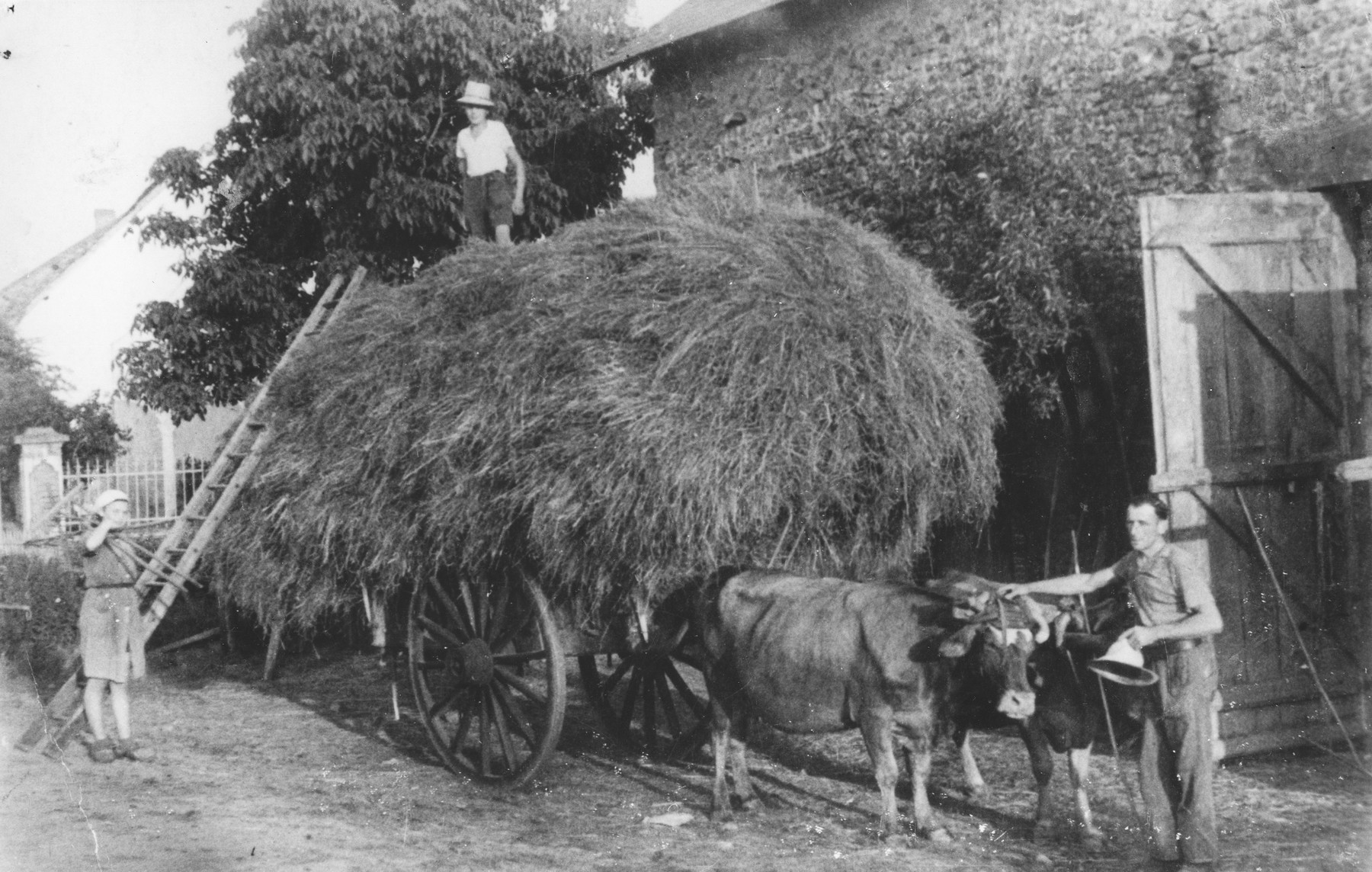 Ingeborg Haas, a Jewish refugee living at the Chabannes children's home, helps load a hay wagon at the farm where she worked near the home.