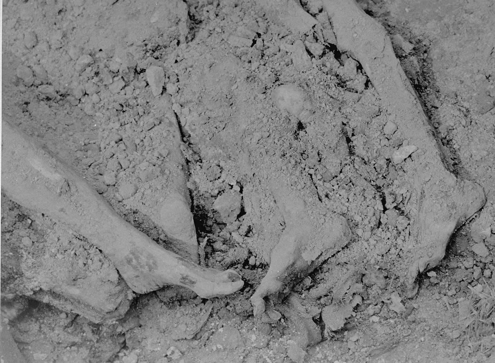 View of corpses discovered in a mass grave at Berga-Elster, a sub-camp of Buchenwald.