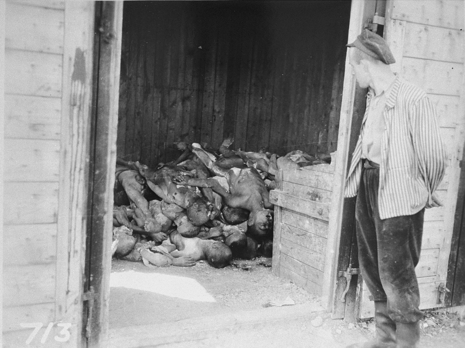 A survivor views a pile of bodies stacked in a shed in the Ohrduf concentration camp.