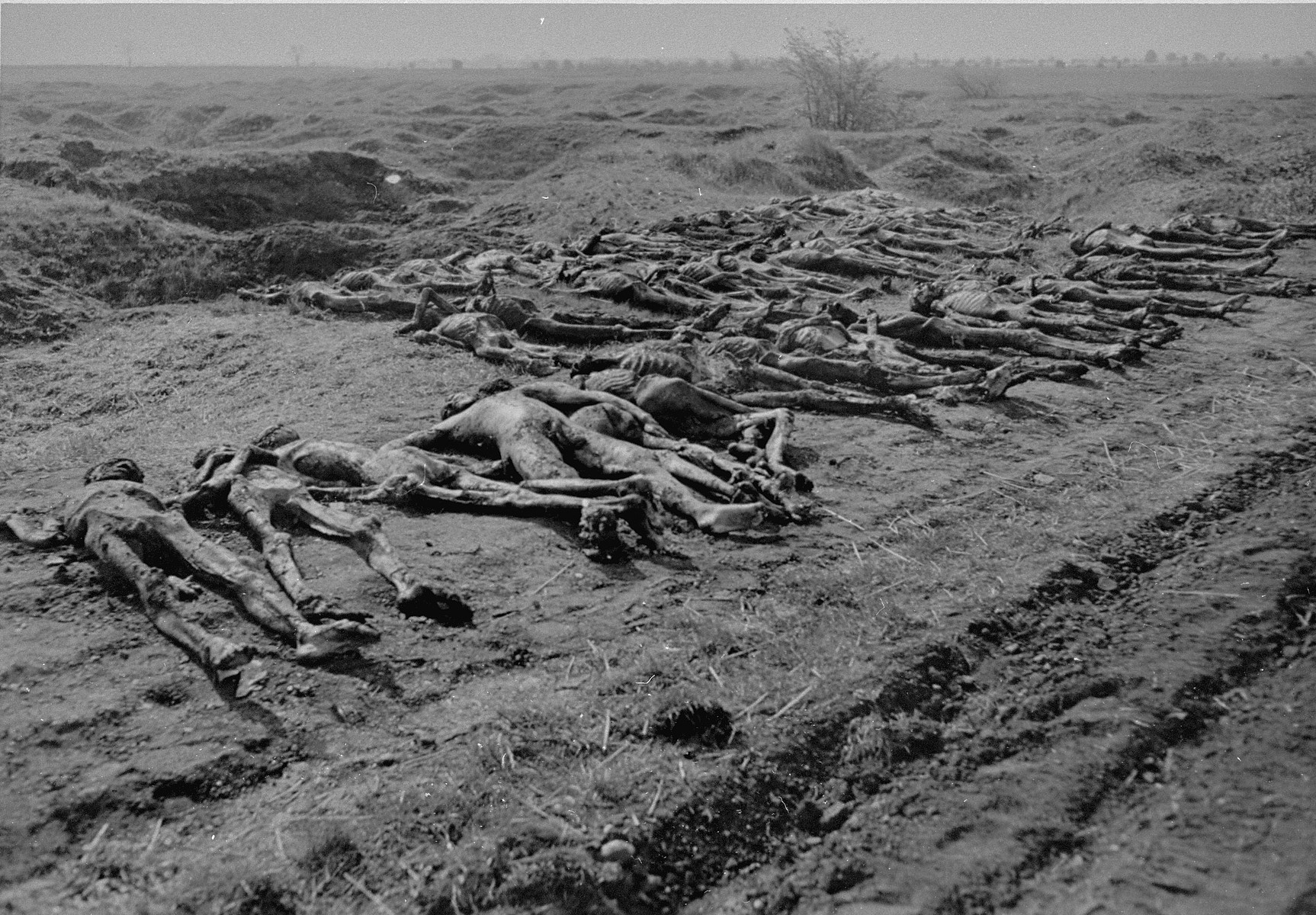 "Corpses exhumed from a mass grave in Ploemnitz (""Leau"" after 28 October 1944), a sub-camp of Buchenwald."
