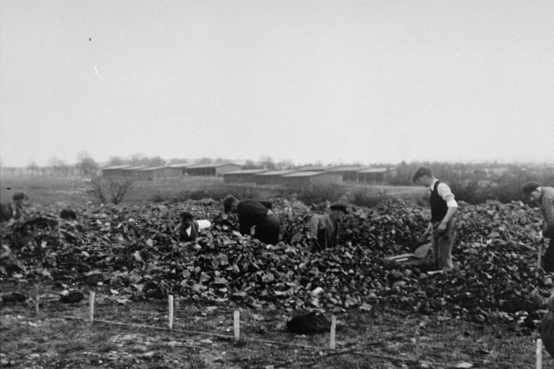 German civilians conscripted from nearby towns dig graves for corpses found in the Ohrdruf concentration camp, which is visible in the distance.
