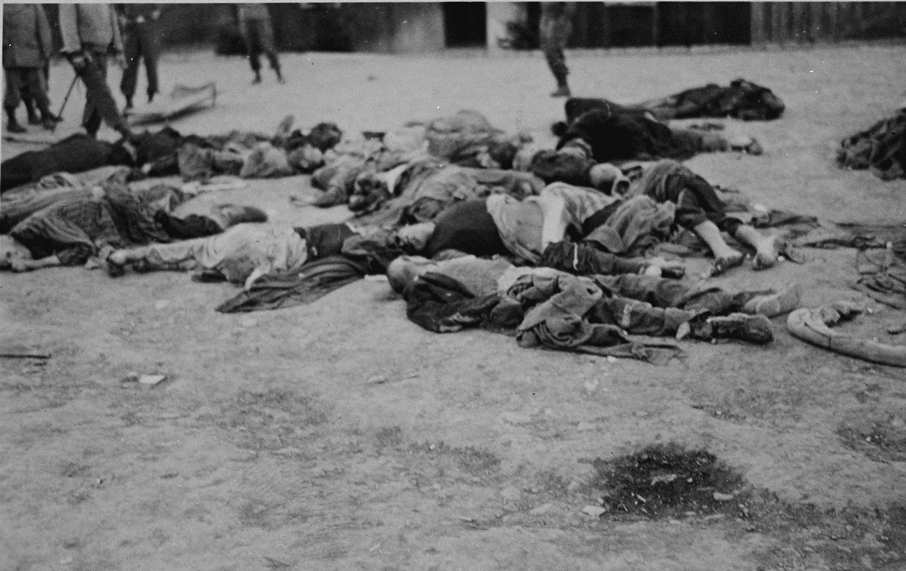 The corpses of prisoners machine-gunned by SS guards just prior to evacuation of the camp.