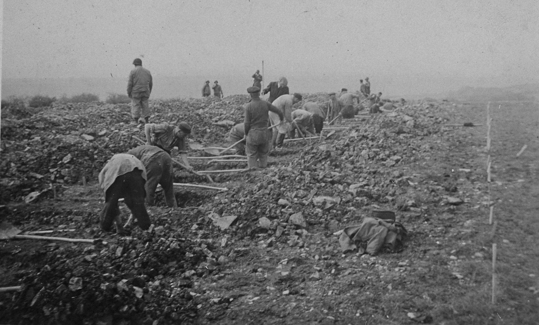 German civilians conscripted from nearby towns dig graves for prisoners killed in Ohrdruf.