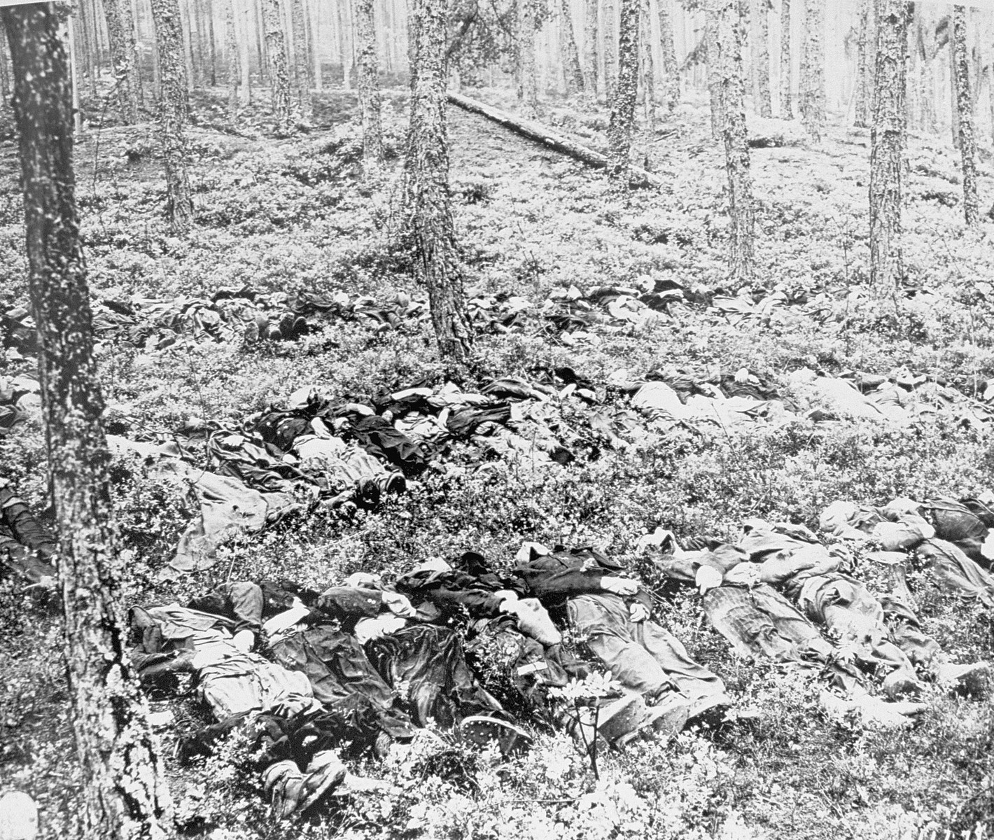 The bodies of prisoners executed by the SS prior to the evacuation are laid out in a wooded area near the Ohrdruf concentration camp.