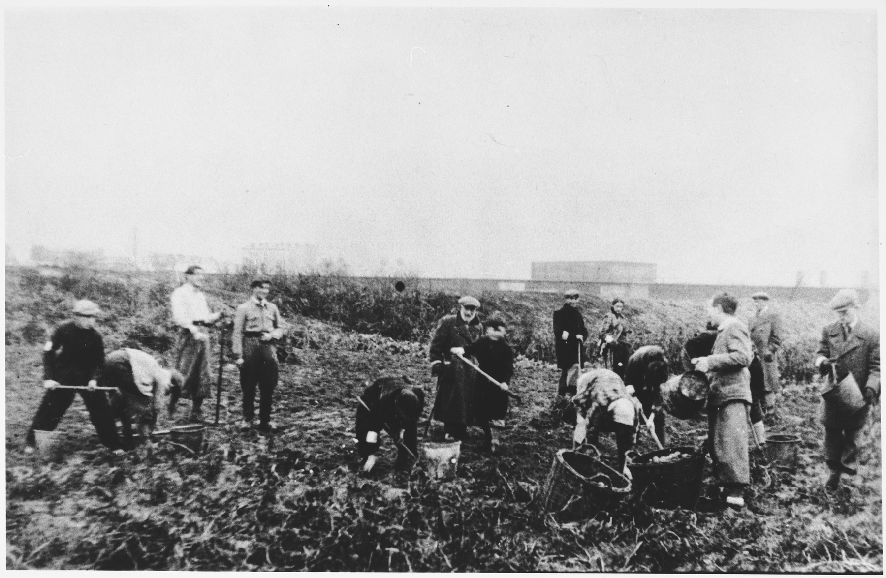 Jews wearing armbands hoe a field in what probably is the Warsaw ghetto.