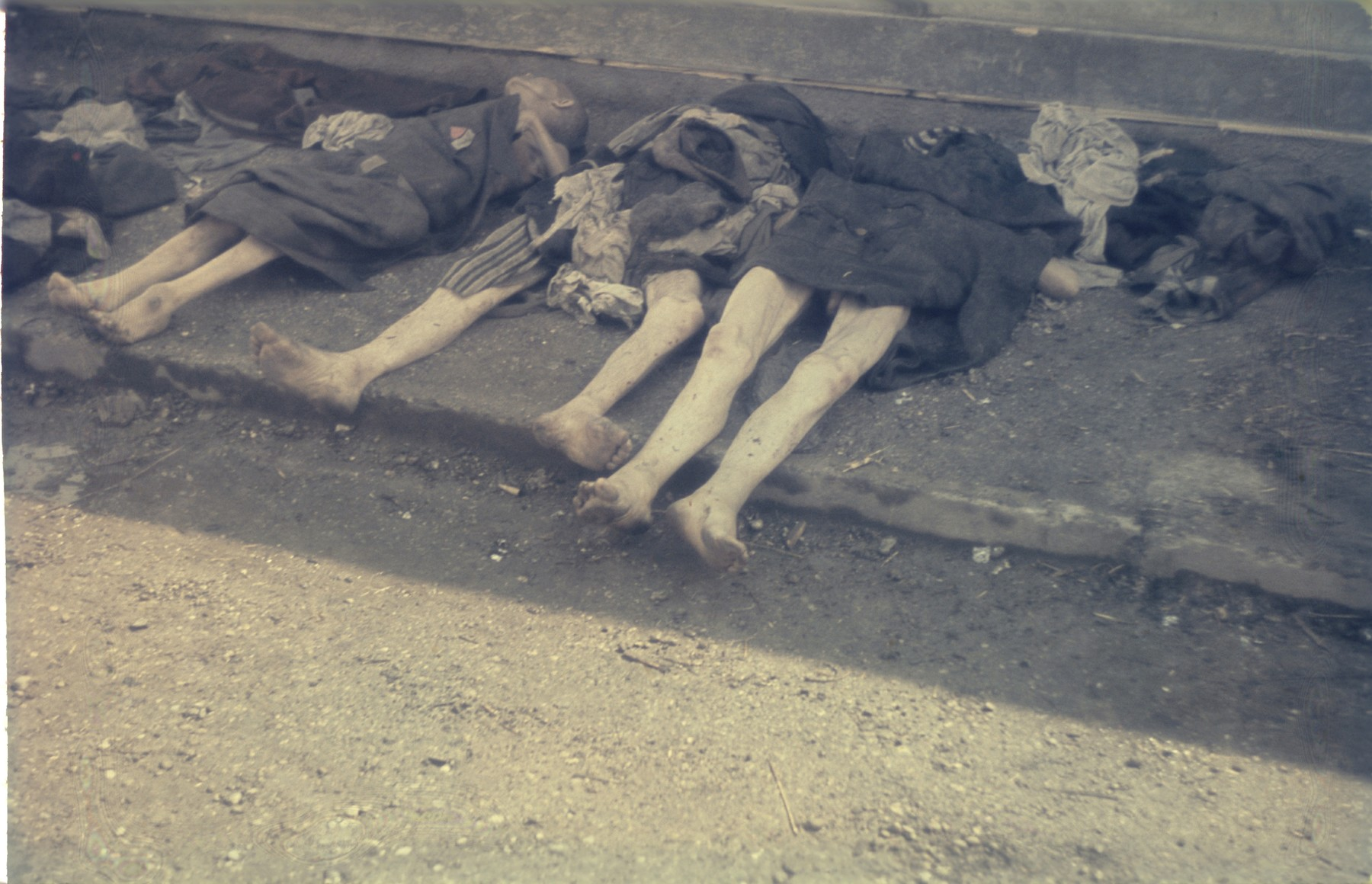 A row of corpses laid out on the pavement in the newly liberated Dachau concentration camp.