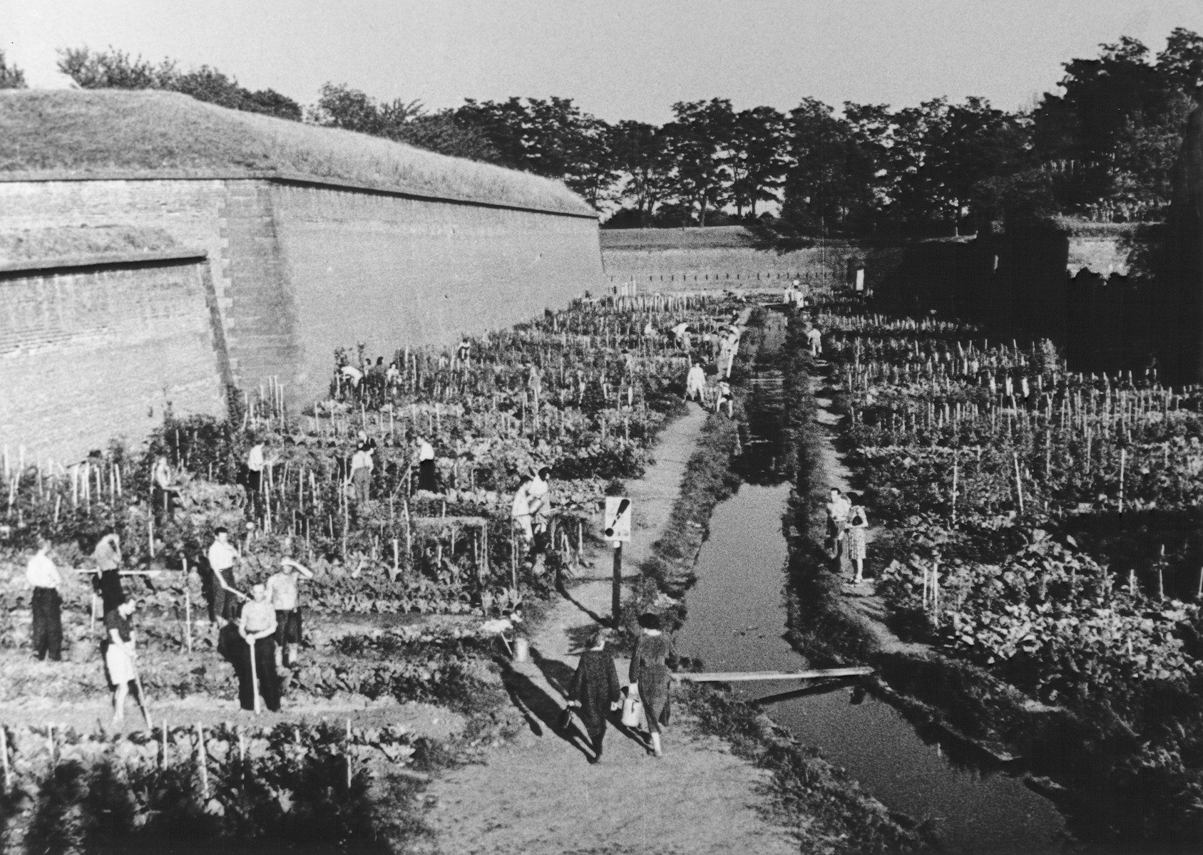 "STILL PHOTOGRAPH FROM THE NAZI PROPAGANDA FILM, ""Der Fuehrer Schenkt den Juden eine Stadt"" [The Fuehrer gives the Jews a City].  Theresienstadt inmates working in the SS vegetable gardens.    This work brigade was called the Stab Garten and was greatly increased in size for the filming.  Among those pictuerd is Hana Kleinova Fristensky."