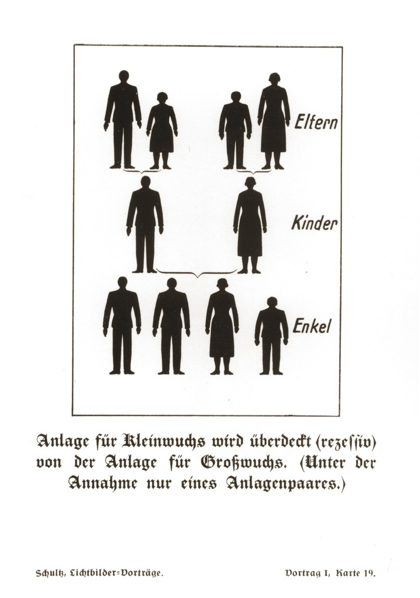 Chart illustrating the transmission of the genetic traits for tall and (recessive) short stature over three generations, taken from a set of slides produced to illustrate a lecture by Dr. Ludwig Arnold Schloesser, director of education for the SS Race and Settlement Office, on the foundations of the study of heredity. [Lecture 1, Card 19]