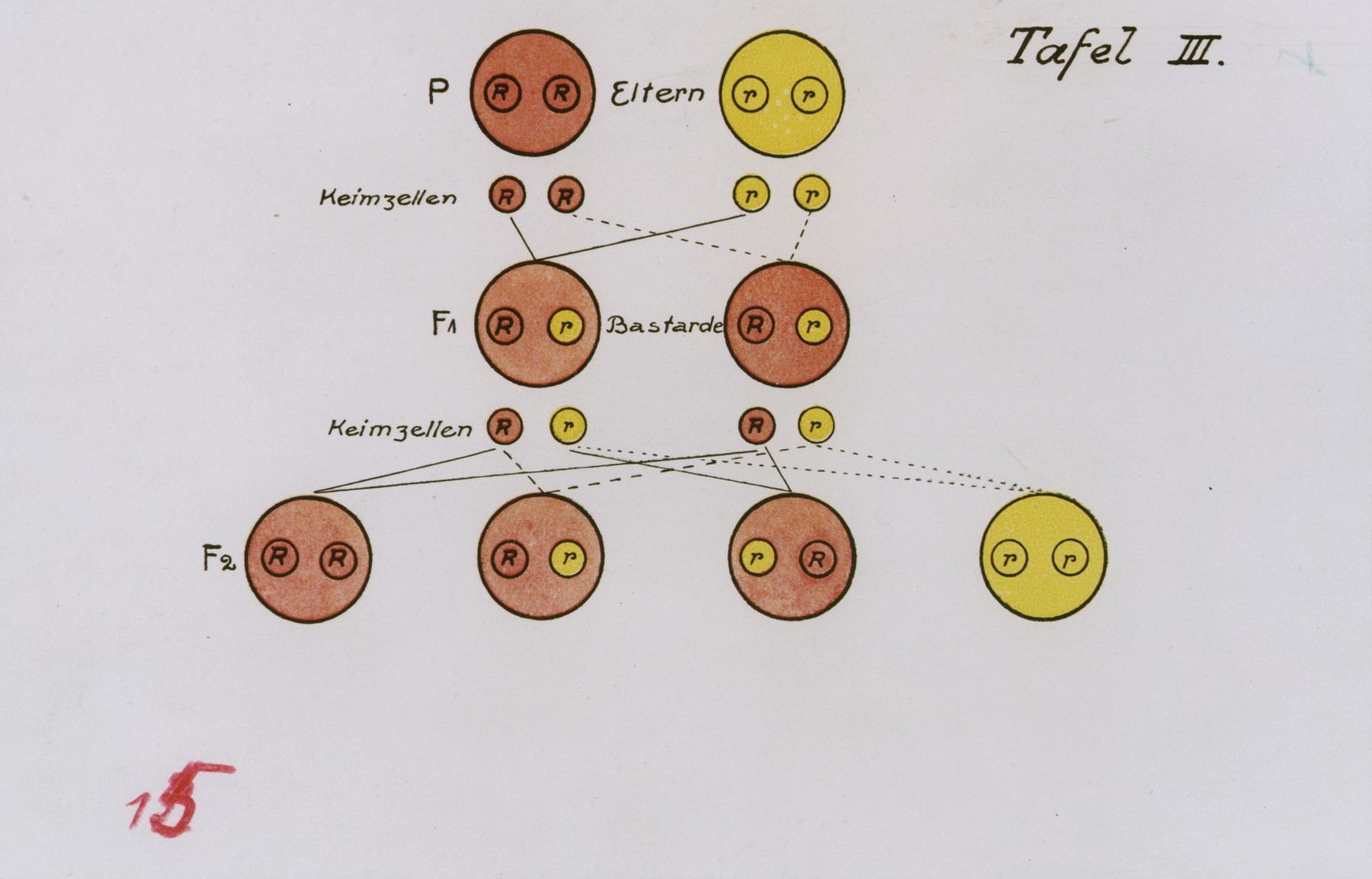 Chart illustrating the transmission ancestral genetic traits.
