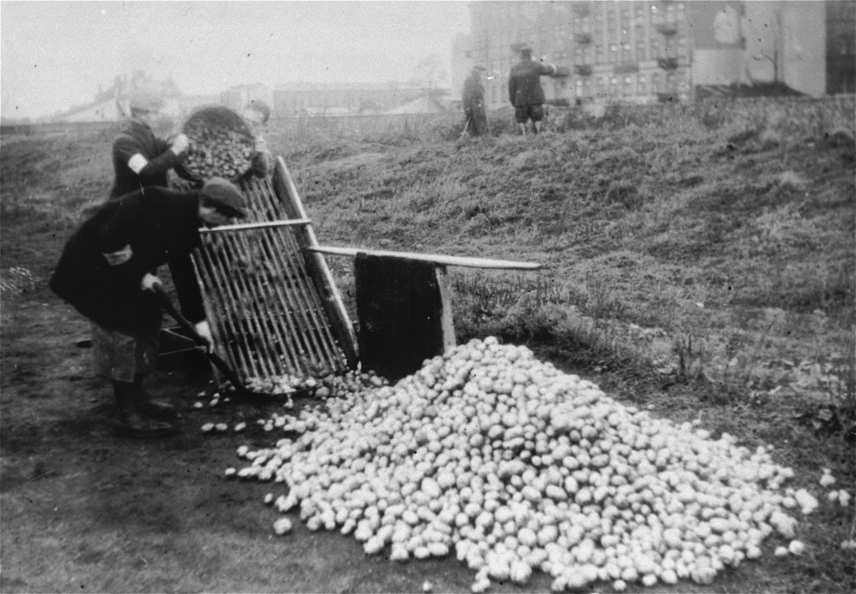 "Jews sorting potatoes in the former sports stadium ""Skra"" on Okopowa Street in the Warsaw ghetto."