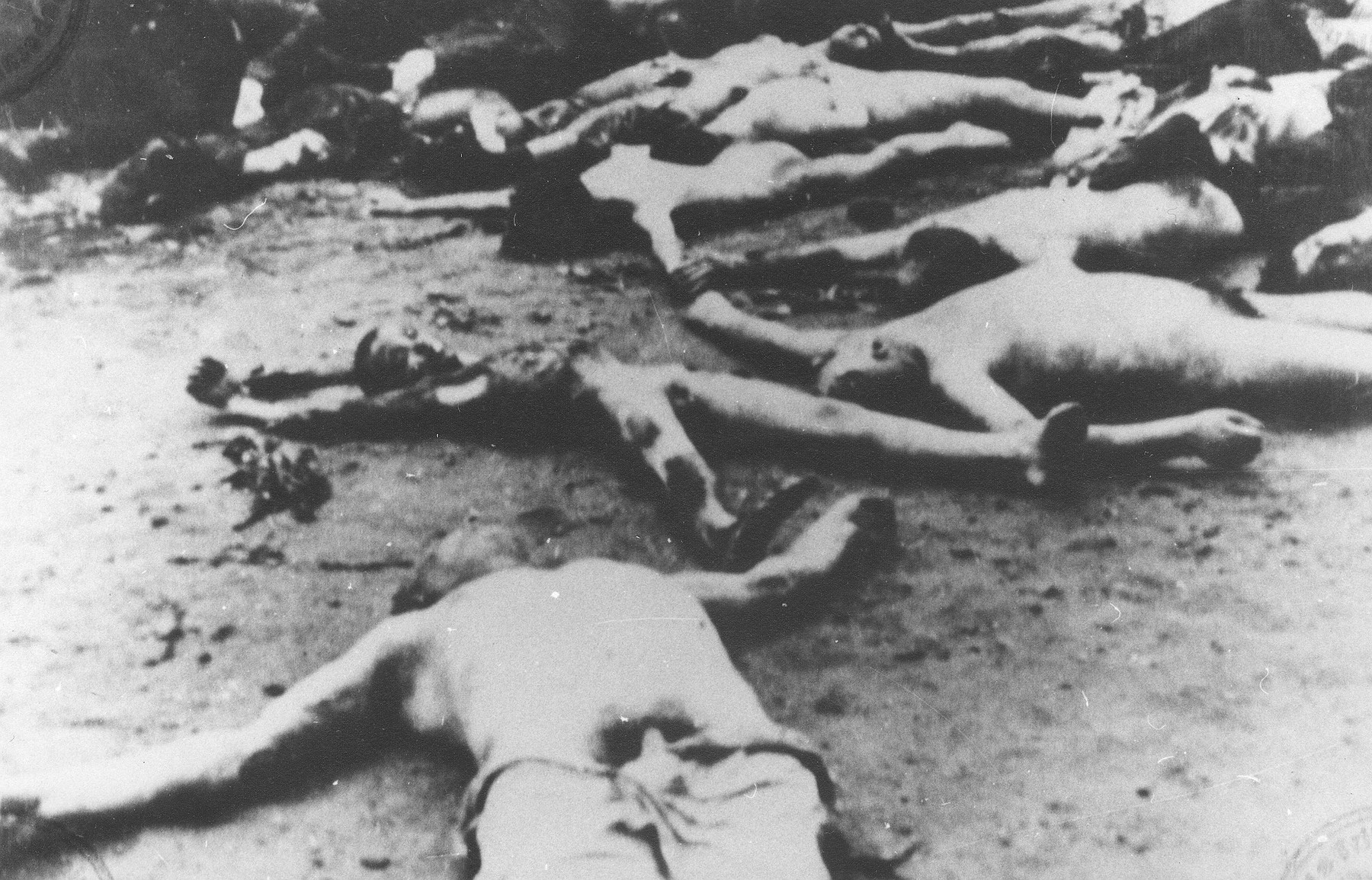 The bodies of Jews who died on the Iasi-Calarasi death train litter the ground where the train stopped at Targu-Frumos.