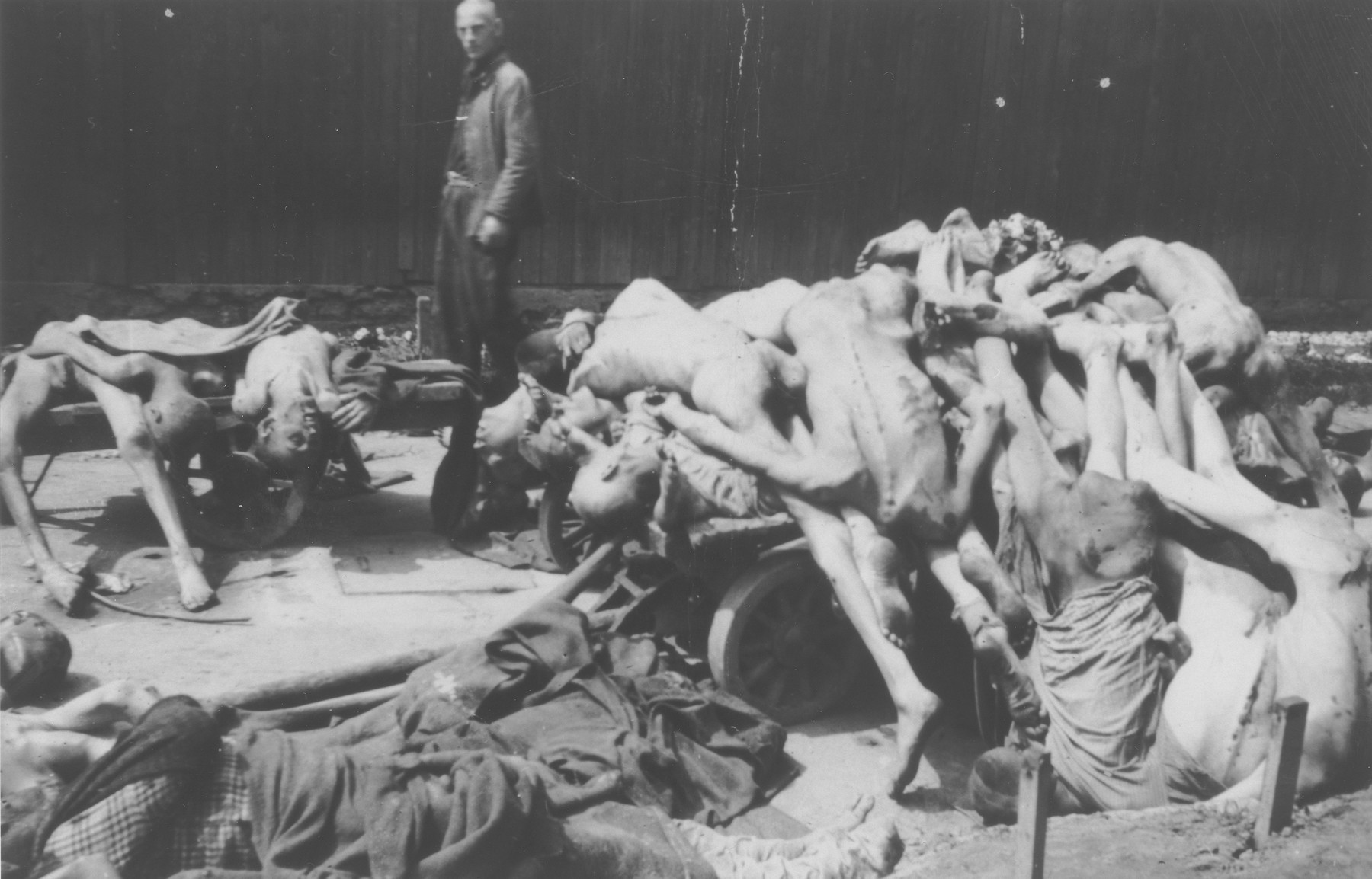 A survivor views piles of corpses that have been stacked on carts and on the ground prior to their burial [probably at the Gusen concentration camp].