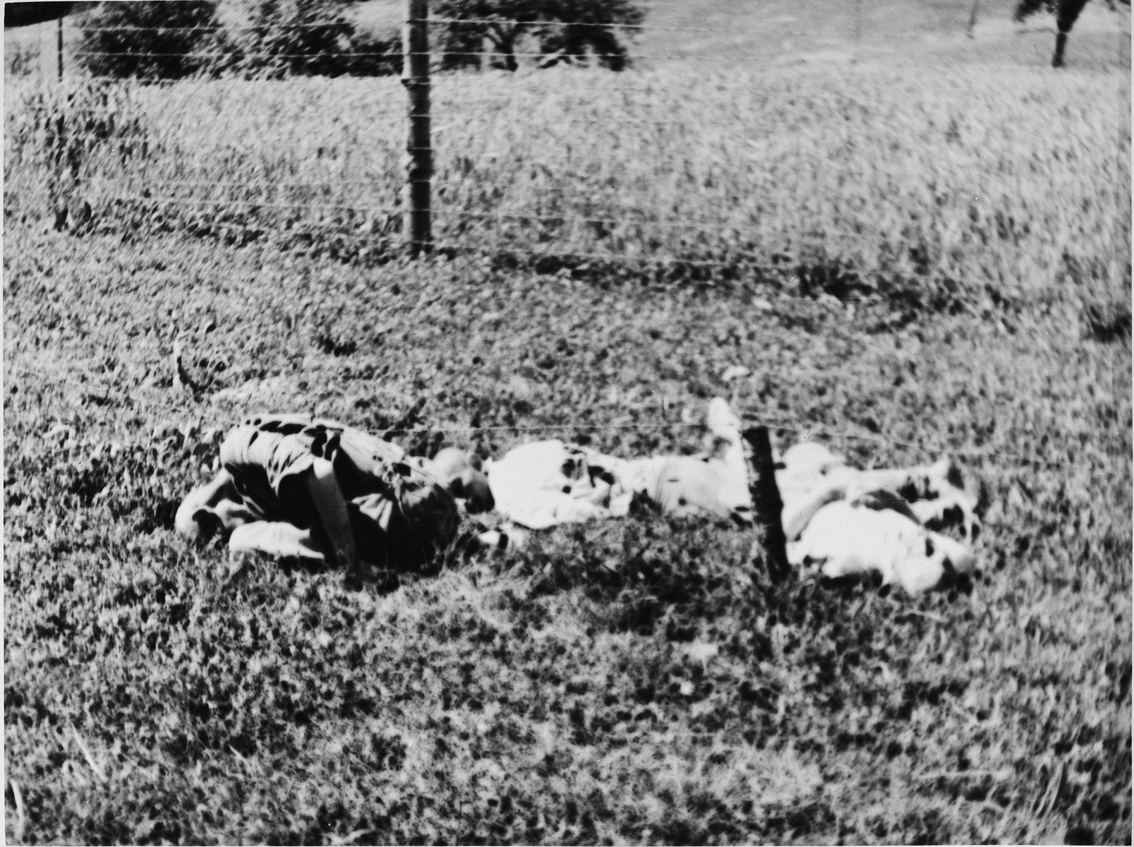 View of the bodies of former prisoners lying near the barbed wire fence in the Mauthausen concentration camp.