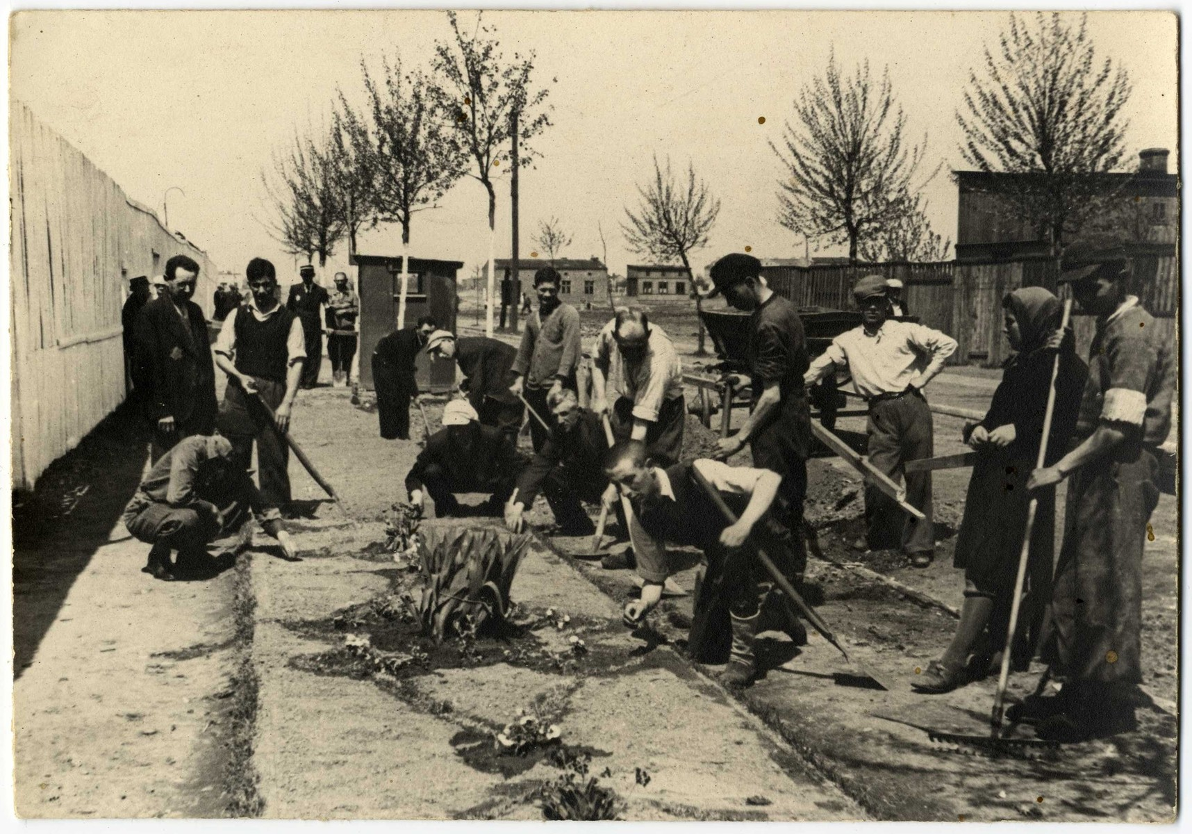 Laborers work with hoes and rakes in the Lodz ghetto.