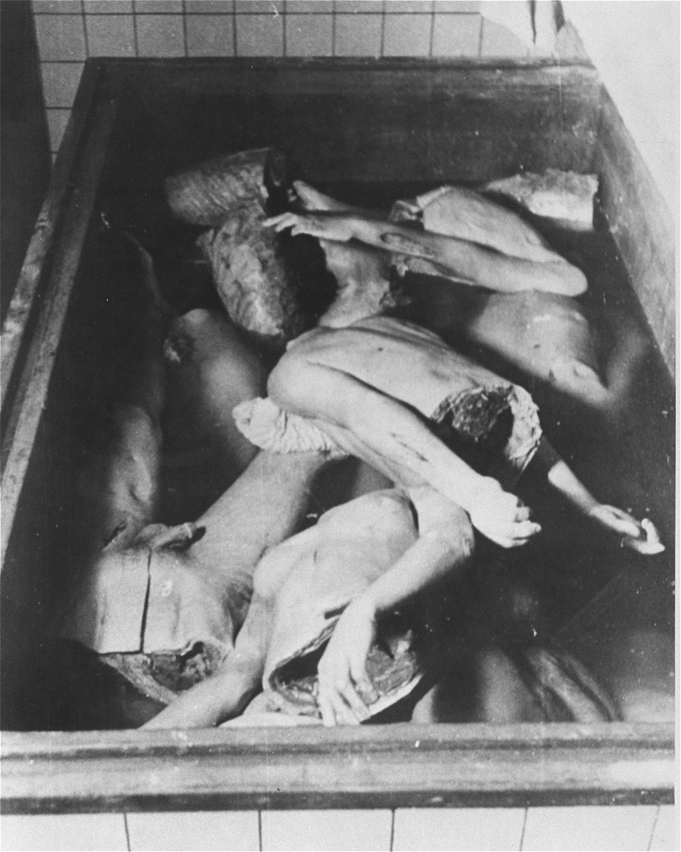 "Human body parts in a vat at the Strasbourg University Anatomical Institute.  At the end of August,1943, eighty-six Jews, including 30 women, were gassed in Natzweiler-Struthof for the purpose of constructing a collection of skulls and skeletons to be kept at the Strasbourg University Institute of Anatomy, under the directorship of August Hirt.  The individuals were ""selected"" at Auschwitz for their special bone structure and transferred to Natzweiler, where SS Captain Josef Kramer, the commandant of the camp, oversaw the operation.  The corpses then remained in vats of alcohol for over a year, the project envisioned by Hirt having never been completed.  When Allied forces approached Strasbourg in November 1944, SS administrators were unaware that evidence of the crime still existed at the Institute, and only at the last minute ordered the bodies destroyed.  This operation failed, however, and 16-17 of the bodies fell into Allied hands. [Klarsfeld, S., ed. The Struthof Album, 1985]"