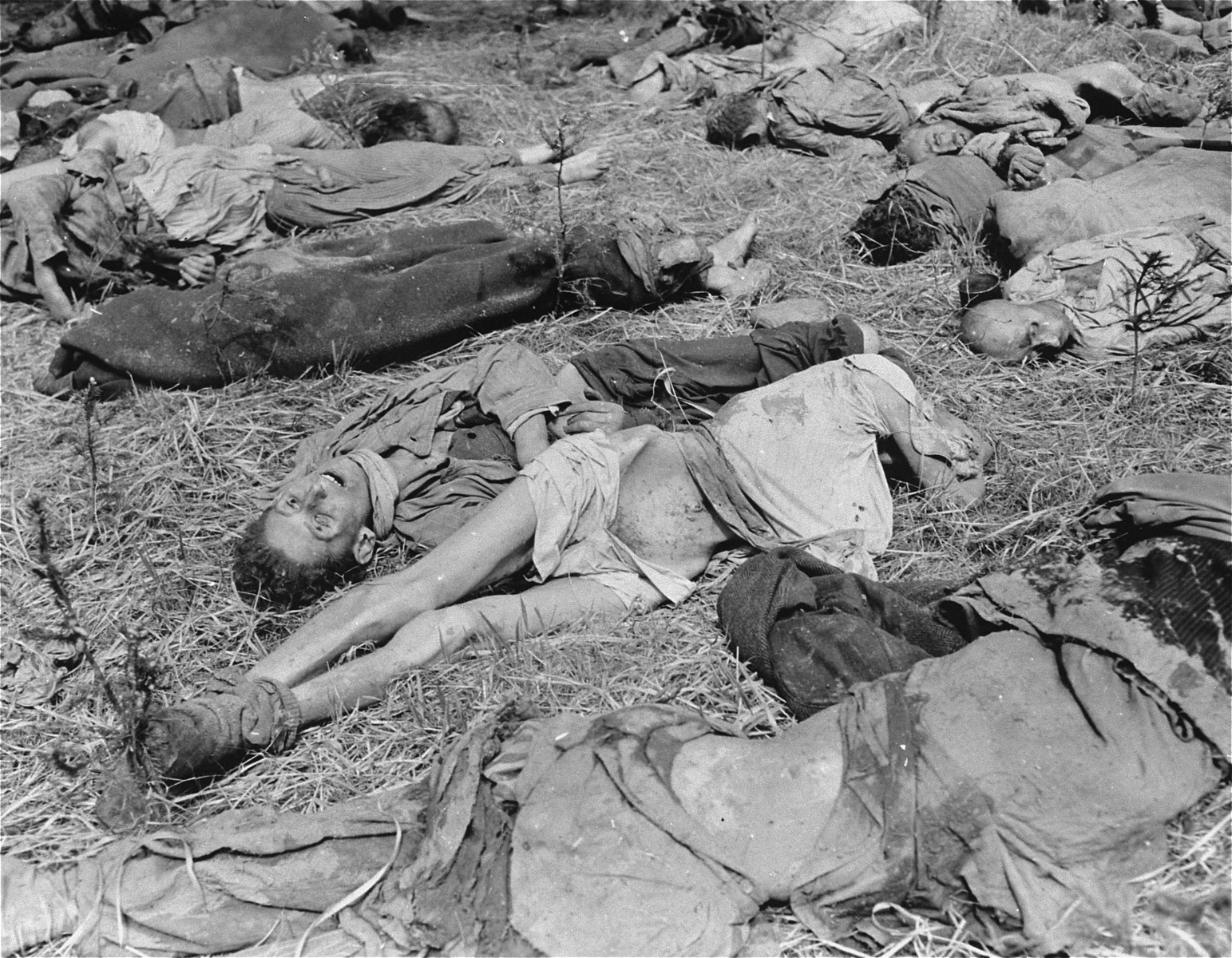 The bodies of prisoners shot by SS guards in Gunskirchen prior to the liberation of the camp by American soldiers.