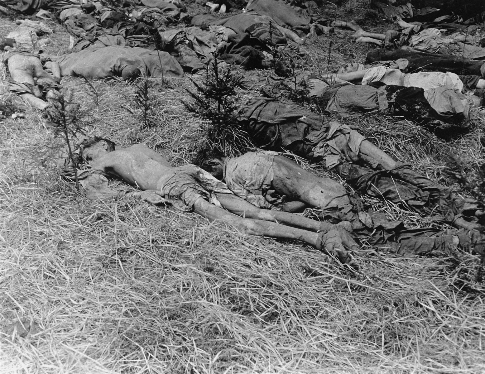 Corpses found in the Gunskirchen concentration camp at the time of its liberation by American troops.