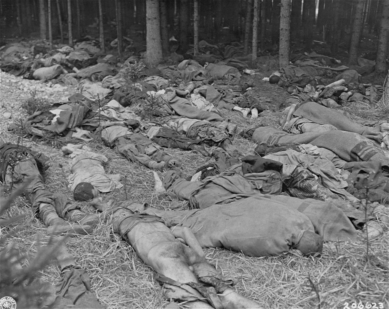 The corpses of prisoners are strewn on the ground in a wooded area of the Gunskirchen concentration camp.
