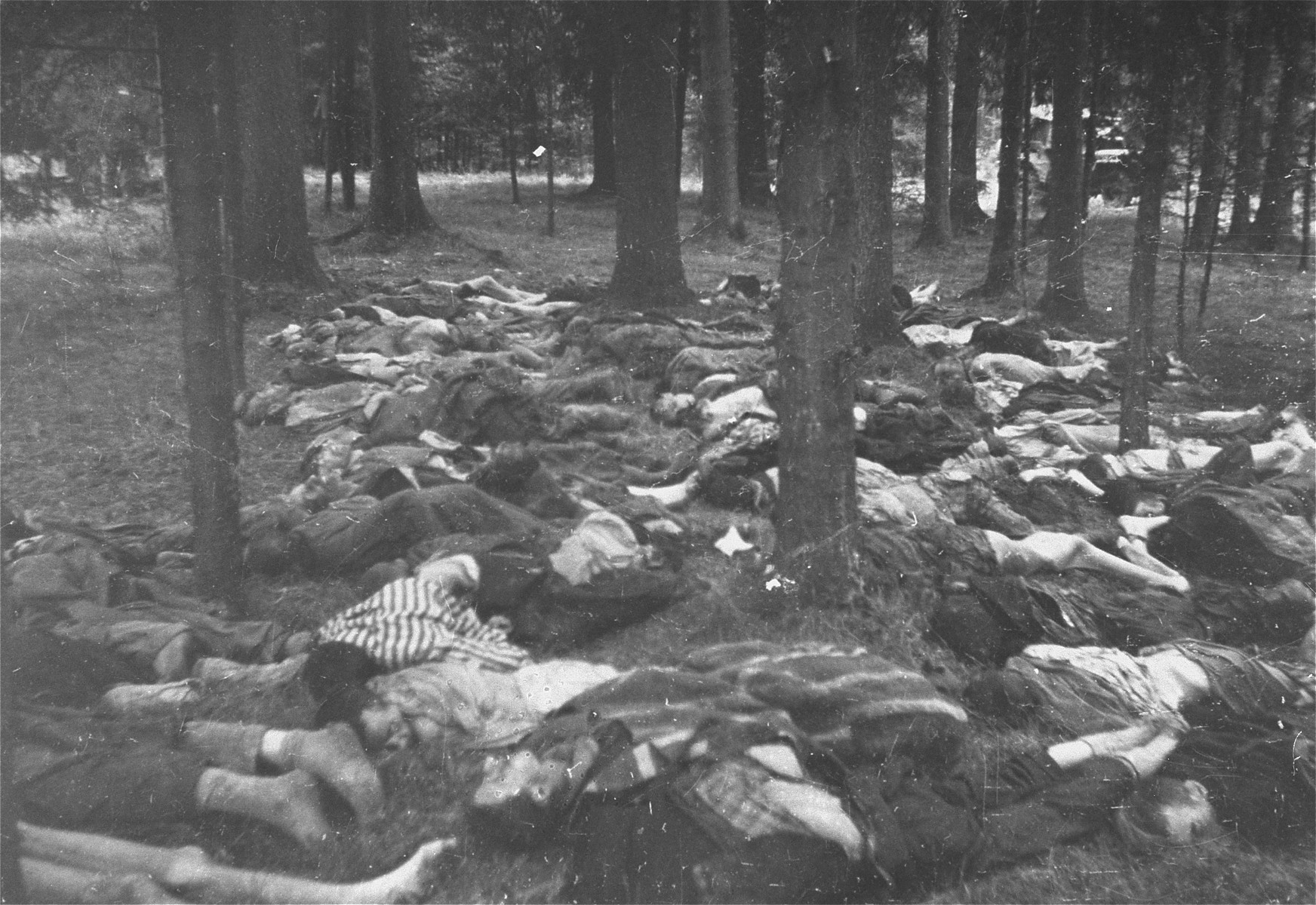 The bodies of executed prisoners in Gunskirchen.