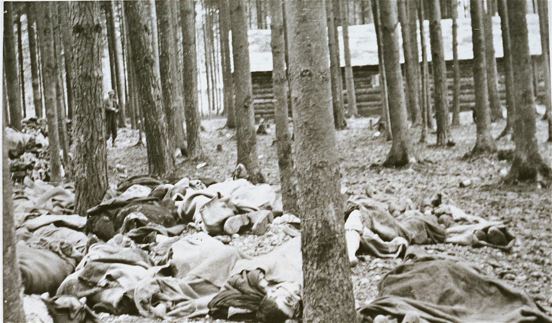 Corpses in the Gunskirchen concentration camp.