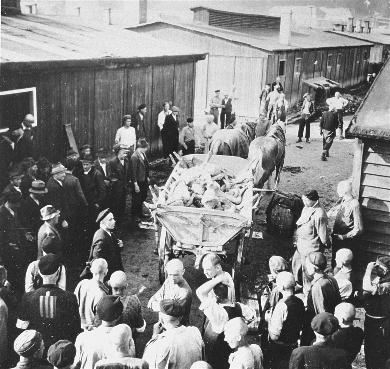 Austrian civilians remove a cartload of corpses from the Gusen concentration camp.
