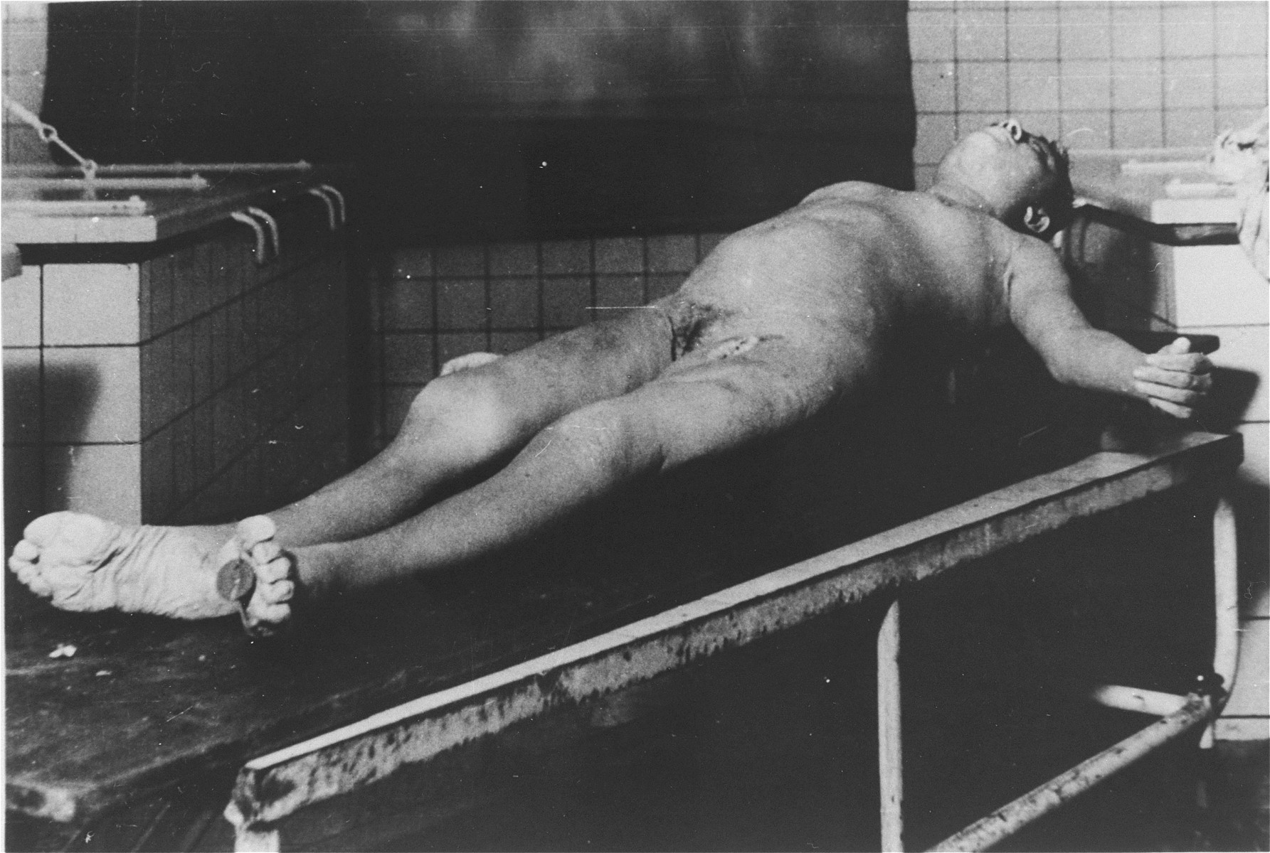 """The corpse of a Jewish woman found in an alcohol-filled vat at the Strasbourg University Anatomical Institute.  At the end of August,1943, eighty-six Jews, including 30 women, were gassed in Natzweiler-Struthof for the purpose of constructing a collection of skulls and skeletons to be kept at the Strasbourg University Institute of Anatomy, under the directorship of August Hirt.  The individuals were """"selected"""" at Auschwitz for their special bone structure and transferred to Natzweiler, where SS Captain Josef Kramer, the commandant of the camp, oversaw the operation.  The corpses then remained in vats of alcohol for over a year, the project envisioned by Hirt having never been completed.  When Allied forces approached Strasbourg in November 1944, SS administrators were unaware that evidence of the crime still existed at the Institute, and only at the last minute ordered the bodies destroyed.  This operation failed, however, and 16-17 of the bodies fell into Allied hands. [Klarsfeld, S., ed. The Struthof Album, 1985]"""