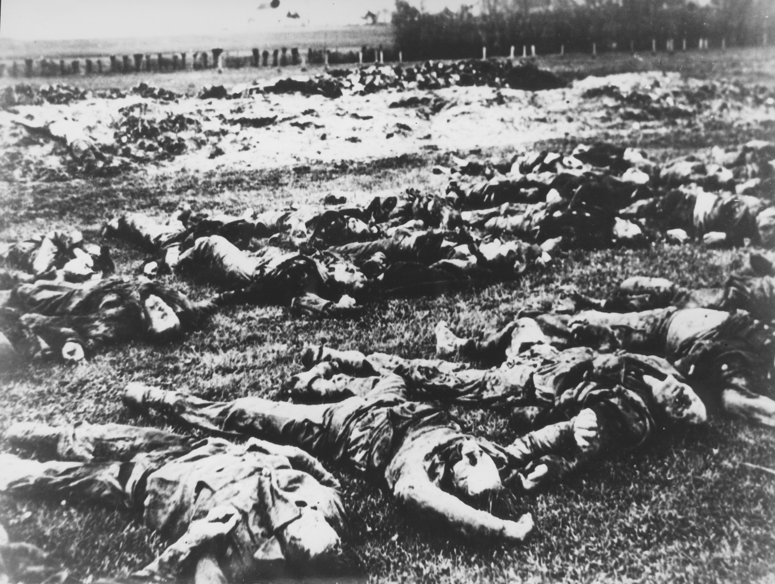 The bodies of Serbs killed by the Ustasa in the village of Gudovac, are laid out in rows in a large field.