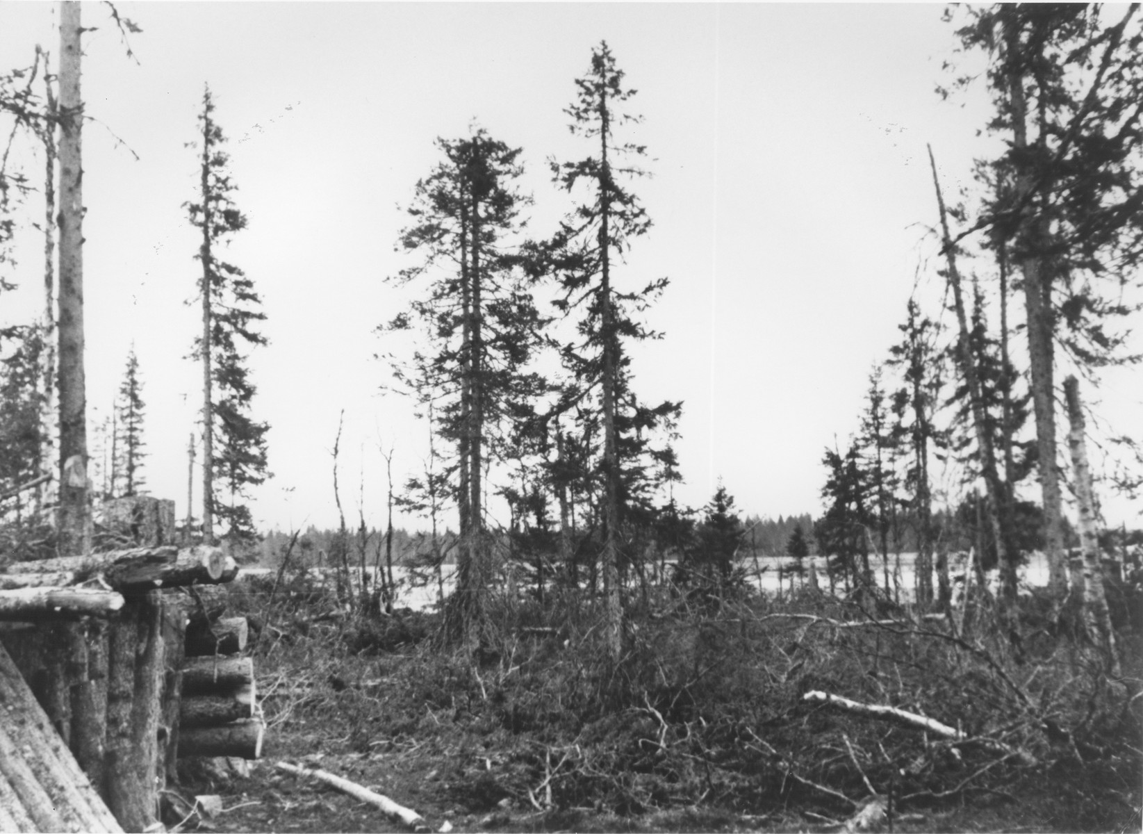 """View of an SS bunker in a forest in the Karelia region of Finland.  The inscription on the photo reads: """"The corner bunker controls the 500M over the lake, where the enemy is entrenched on a forested island.  War reporter Wisniewski."""