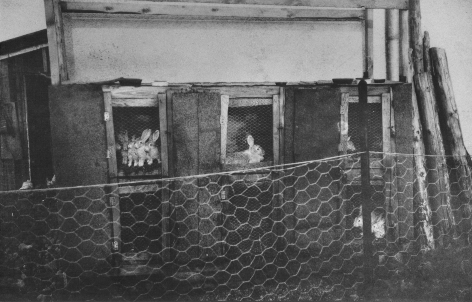 View of a rabbit hutch on Heinrich Himmler's farm in Waldtrudering, Germany.