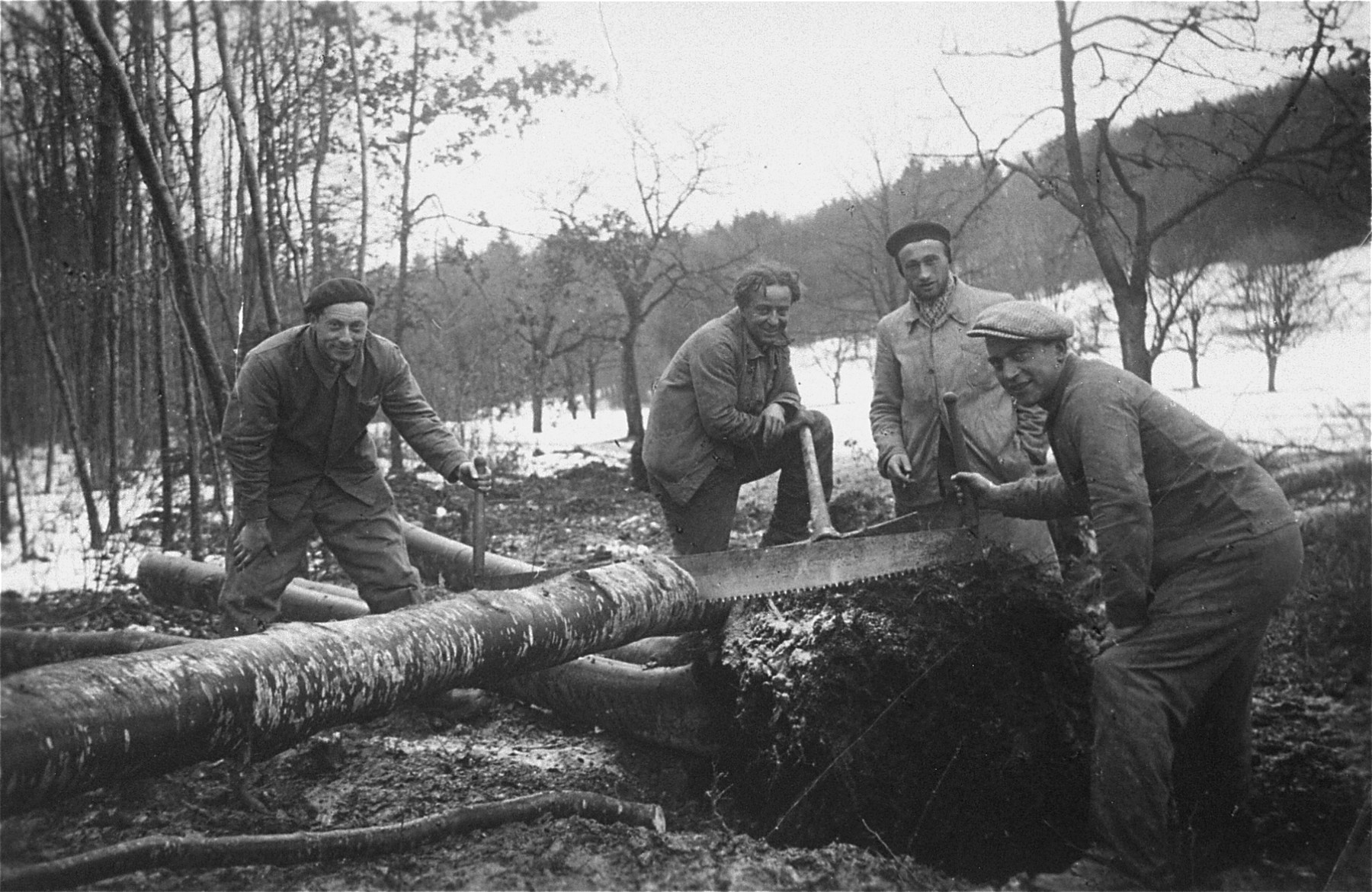 Jewish refugees at work in a Swiss labor camp, sawing a tree trunk.