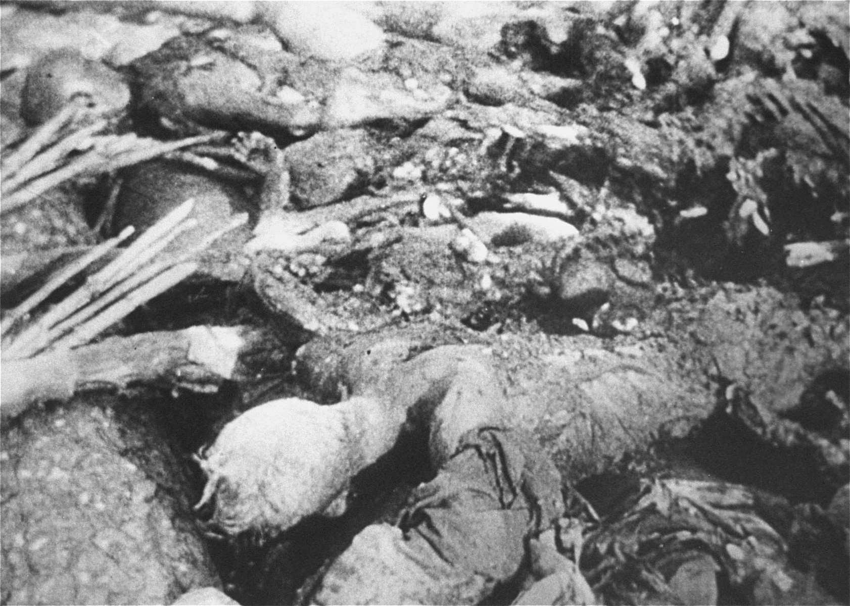 The charred remains of prisoners burned by the Germans before the liberation of the Maly Trostinets concentration camp.