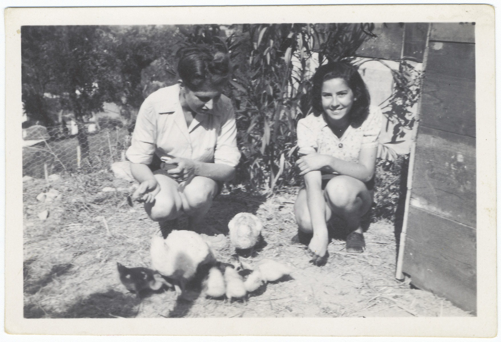 A Jewish mother and her teenage daughter feed ducks they are raising while living in the Italian zone near Menton.