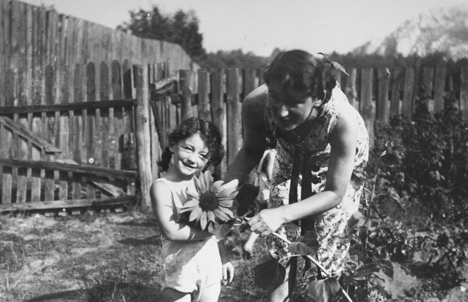 Maria Minc Morgenstern picks sunflowers with one of her twin daughters while living in hiding in occupied Poland.