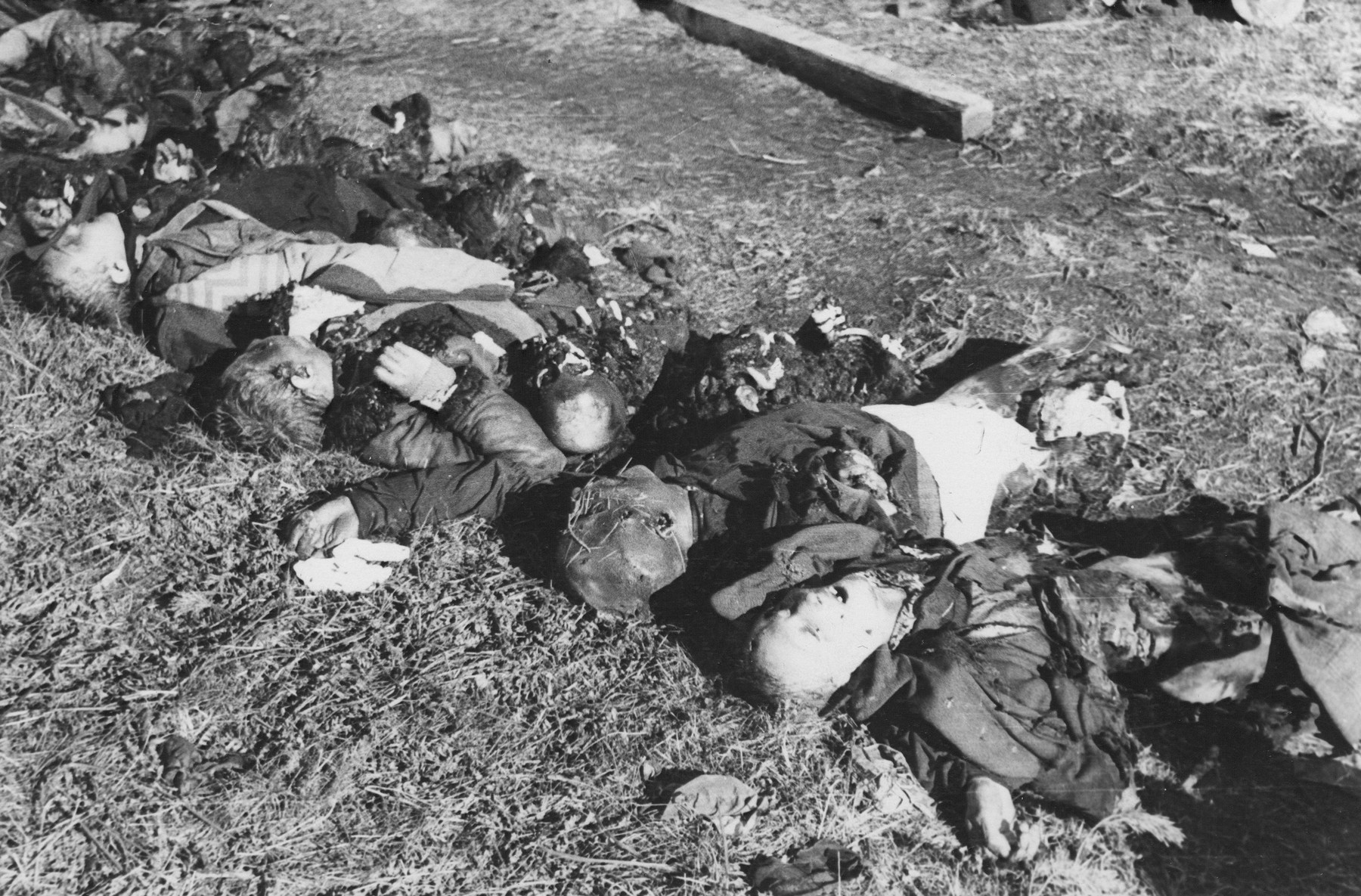 The partially burned corpses of former inmates are lined up on the ground at the Klooga concentration camp.