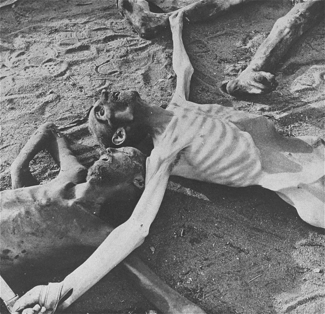 """The bodies of former prisoners lie on the ground in the newly liberated Bergen-Belsen concentration camp.  Th original caption reads """"An incredible sight - similar to which is seen in all parts of the camp.""""  Caption from Clark Kinnaird's book """"This Must Not Happen Again!"""" (New York, Pilot Press, 1945) reads: """"Crucified on the double-cross of fascism."""""""