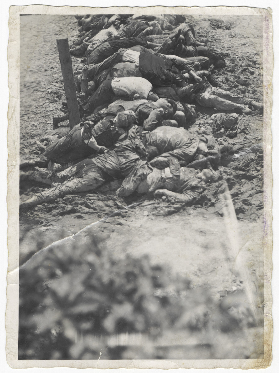 View of a line of corpses [probably following the German invasion of the Soviet Union.]