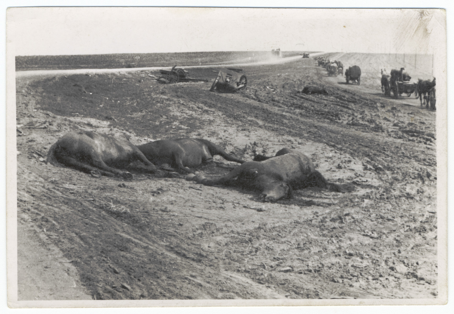 Dead horses lie on the side of a road [probably during the German invasion of the Soviet Union.]