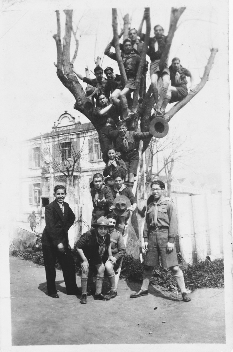 Members of the Maccabi boy scouts pose in the branches of a tree in Salonika.