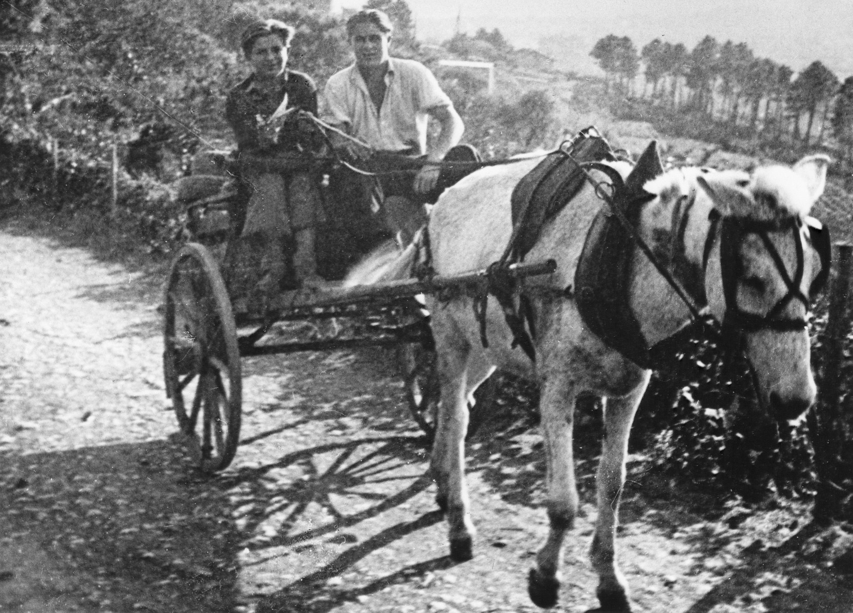 Two refugee teenagers, one Czech and one Jewish, ride in a horse-driven cart, in a farm in Vallon under the protection of the MACE.  Pictured are Arthur Reichl and Zadina.
