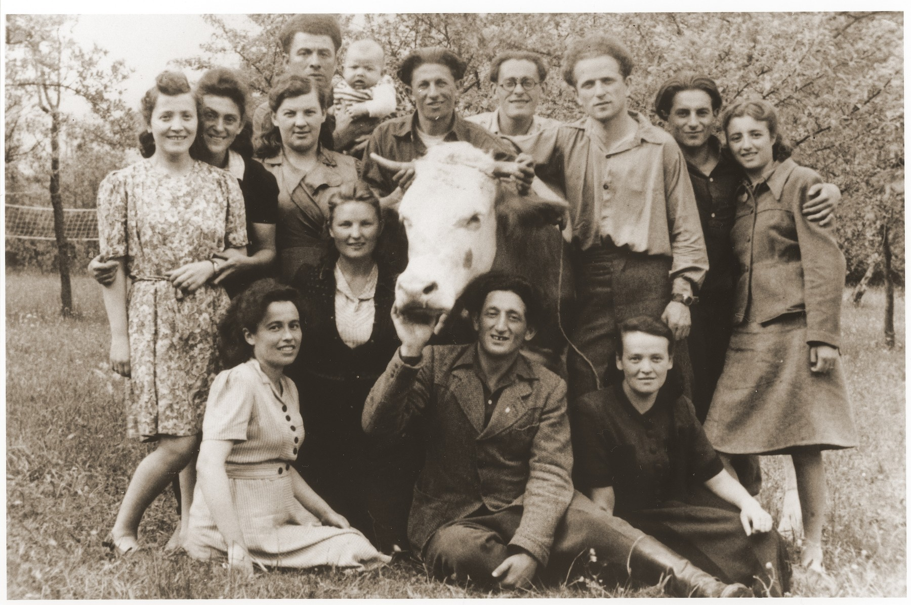Jewish DPs pose around a cow in a  hachshara in Prebitz.    Included in the photograph are Maria and David Bajtner.