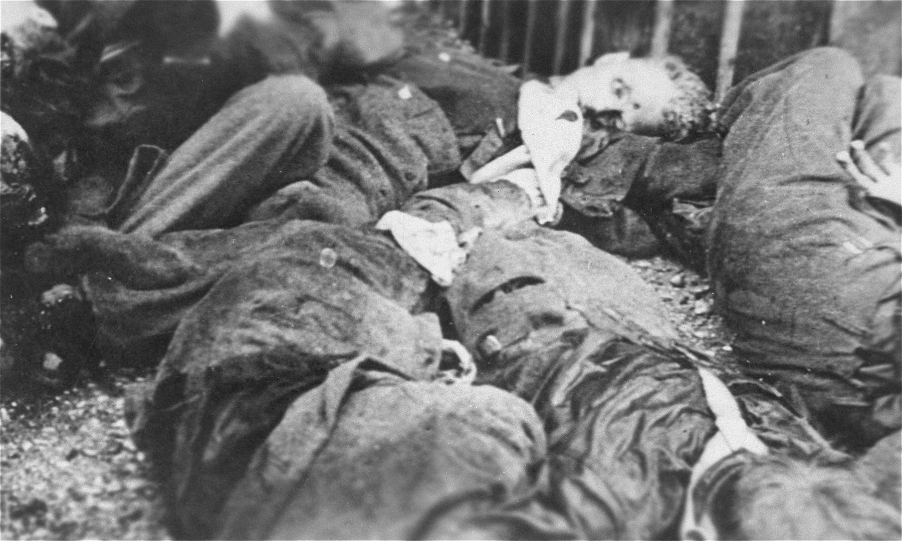 The corpses of SS guards executed by American troops during the liberation of the camp and piled behind the crematorium.