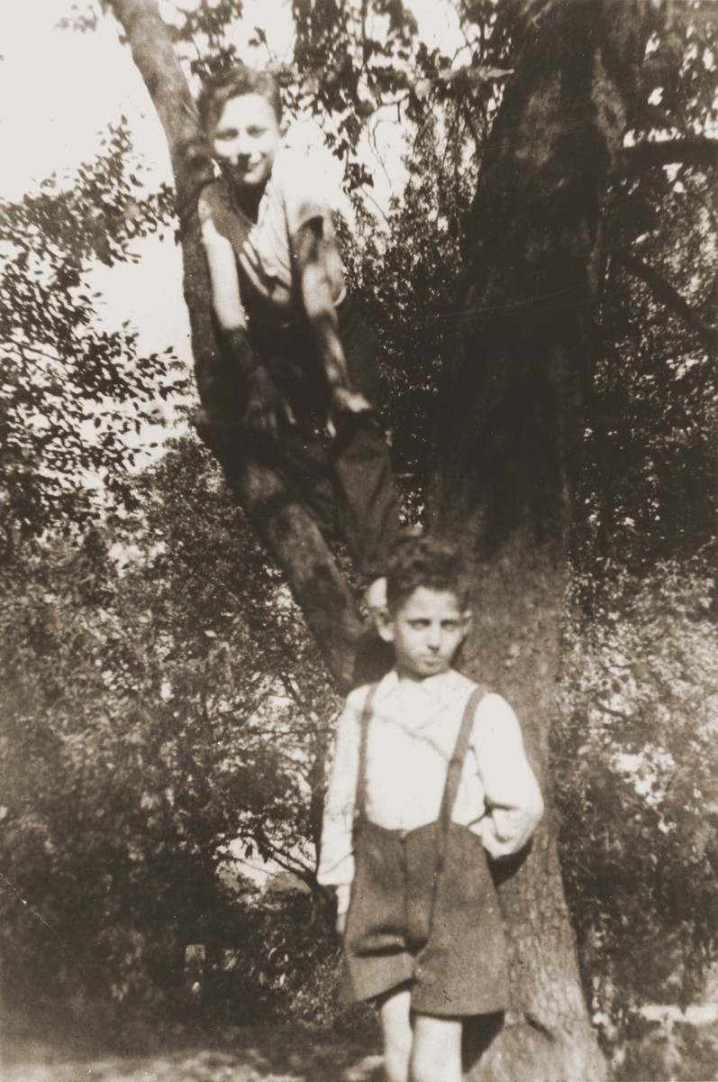 Two boys pose in a tree in the garden of the Jewish children's home in Gleiwitz, Poland.