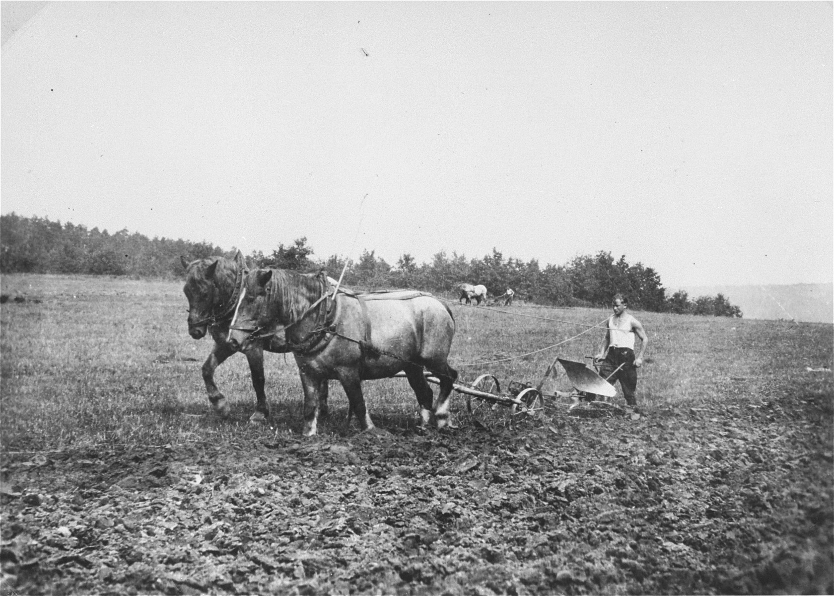 A member of Kibbutz Buchenwald plows the fields with a team of horses.