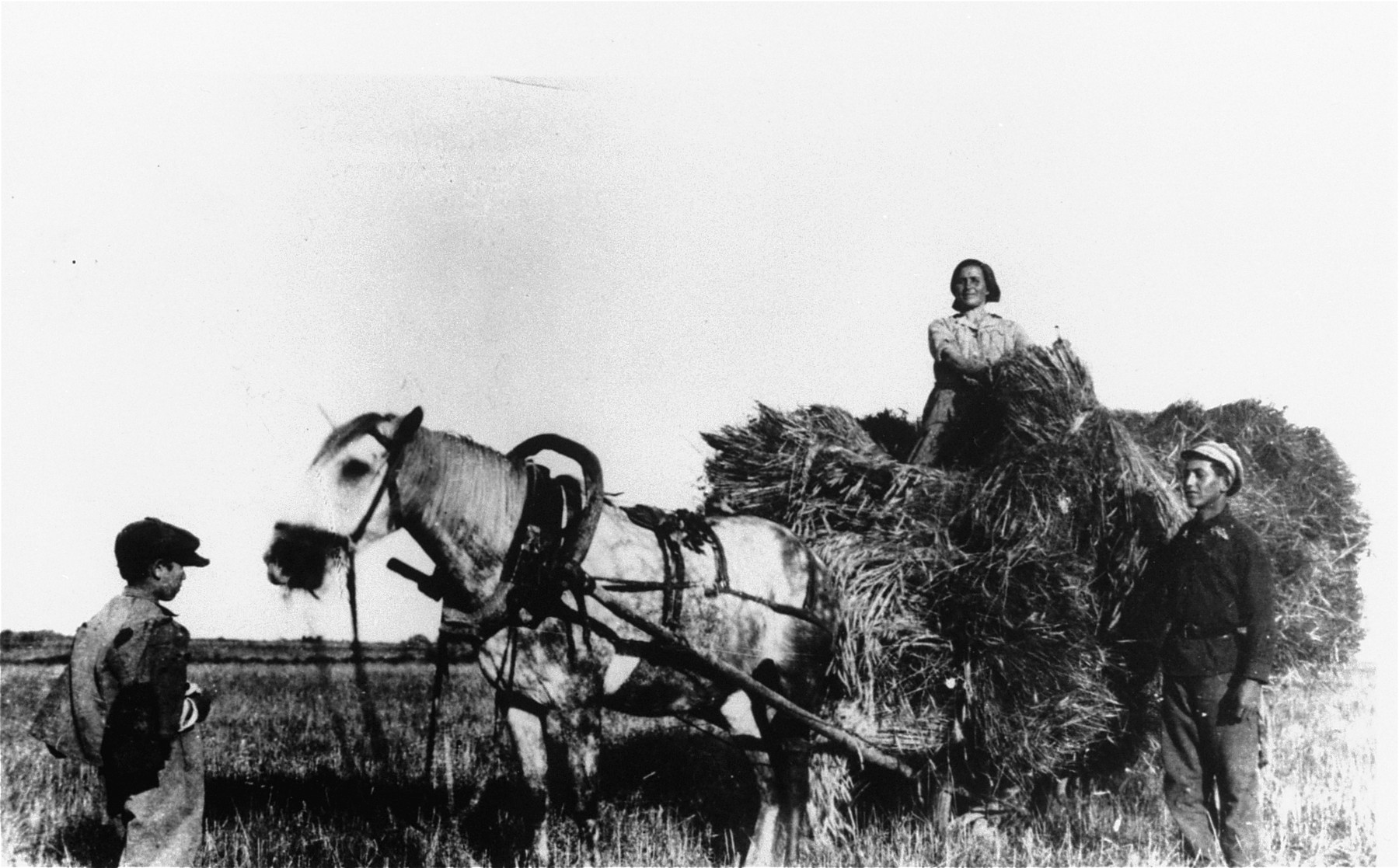 A family of Jewish farmers collects hay from the field and loads it onto their horse-drawn wagon.  Pictured are Chaim Rozenbaum (at the left), his aunt, Zippa Gorbut (on the wagon), and her son Avraham.