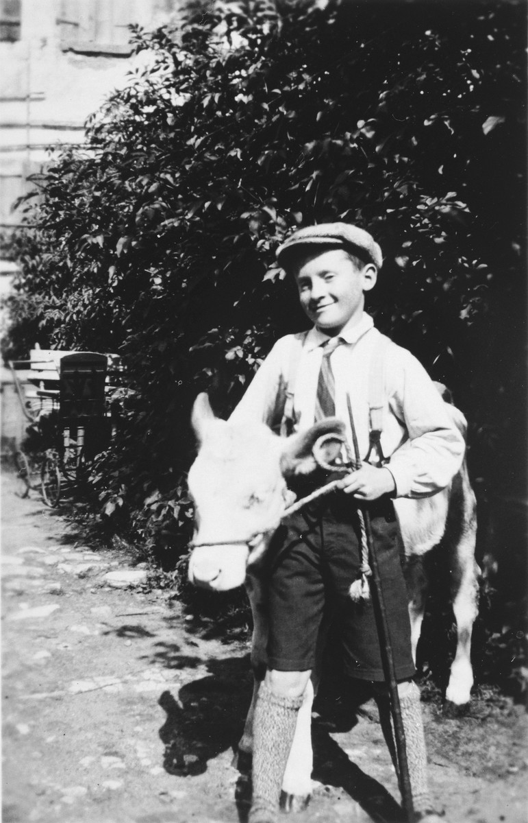 A Jewish child poses with a calf near his home in Wittelshofen, Germany.  Pictured is Siegbert Bravman, a nephew of Flora Winter.