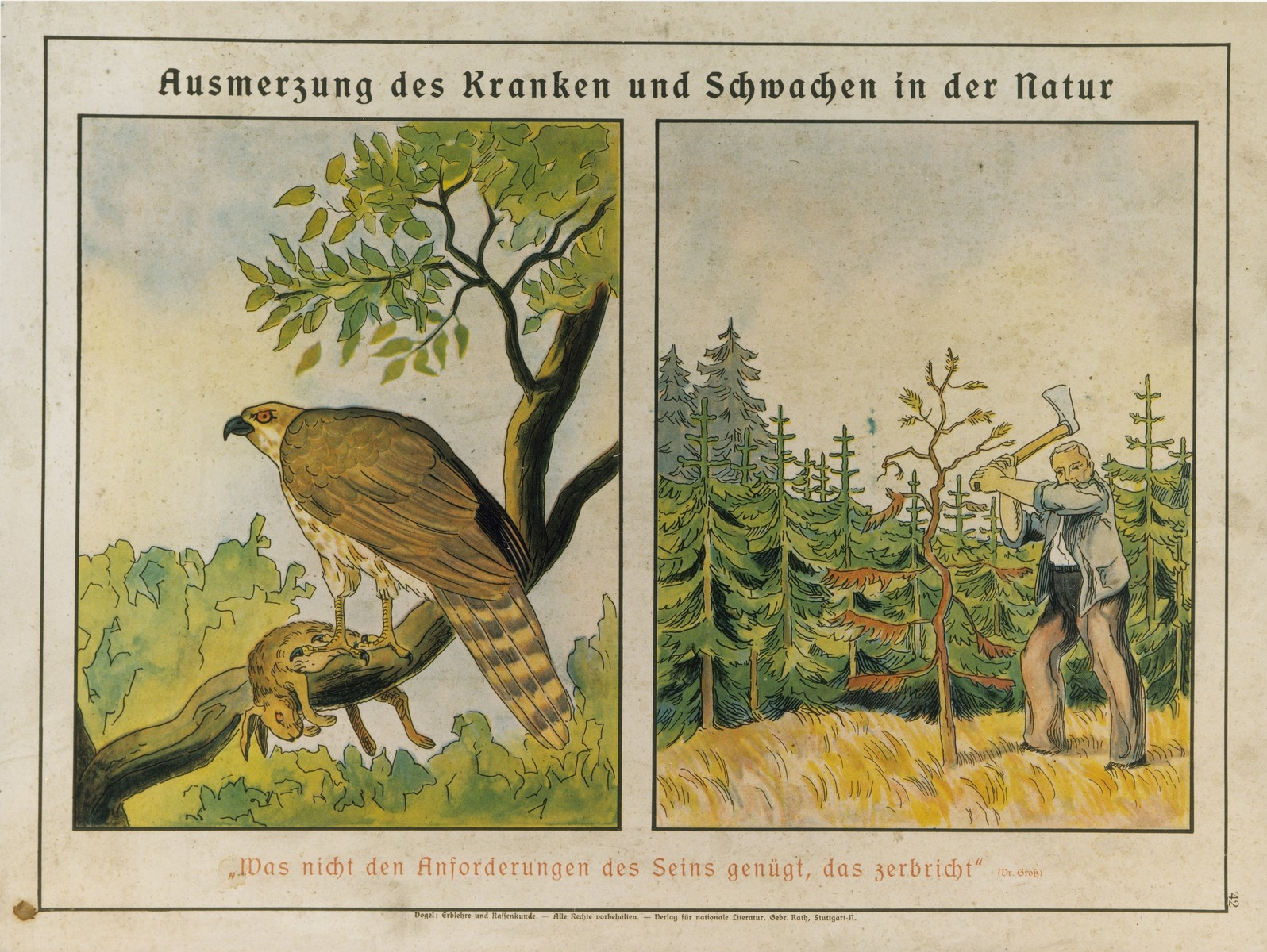 """Eugenics poster entitled """"The eradication of the sick and weak in nature"""" from Hereditary Teachings and Racial Science in Pictorial Representation by Alfred Vogel  The German quotation by Dr. Grosz reads: """"That which does not satisfy the demands of Being collapses.""""  This poster is no.42 in a series entitled, """"Erblehre und Rassenkunde"""" (Theory of Inheritance and Racial Hygiene), published by the Verlag für nationale Literatur (Publisher for National Literature), Stuttgart."""