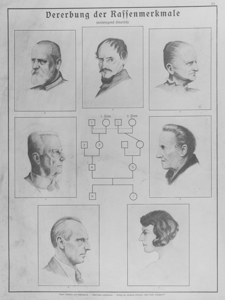 Eugenics Poster Entitled The Inheritance Of Racial Features