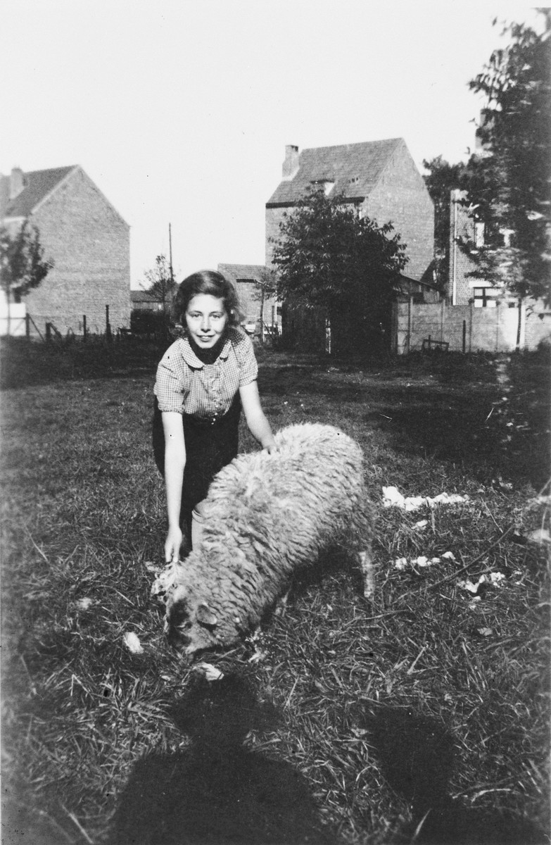A German Jewish refugee child pets a sheep on the grounds of the orphanage where she is staying in Belgium.    Pictured is Ilse Wulff.