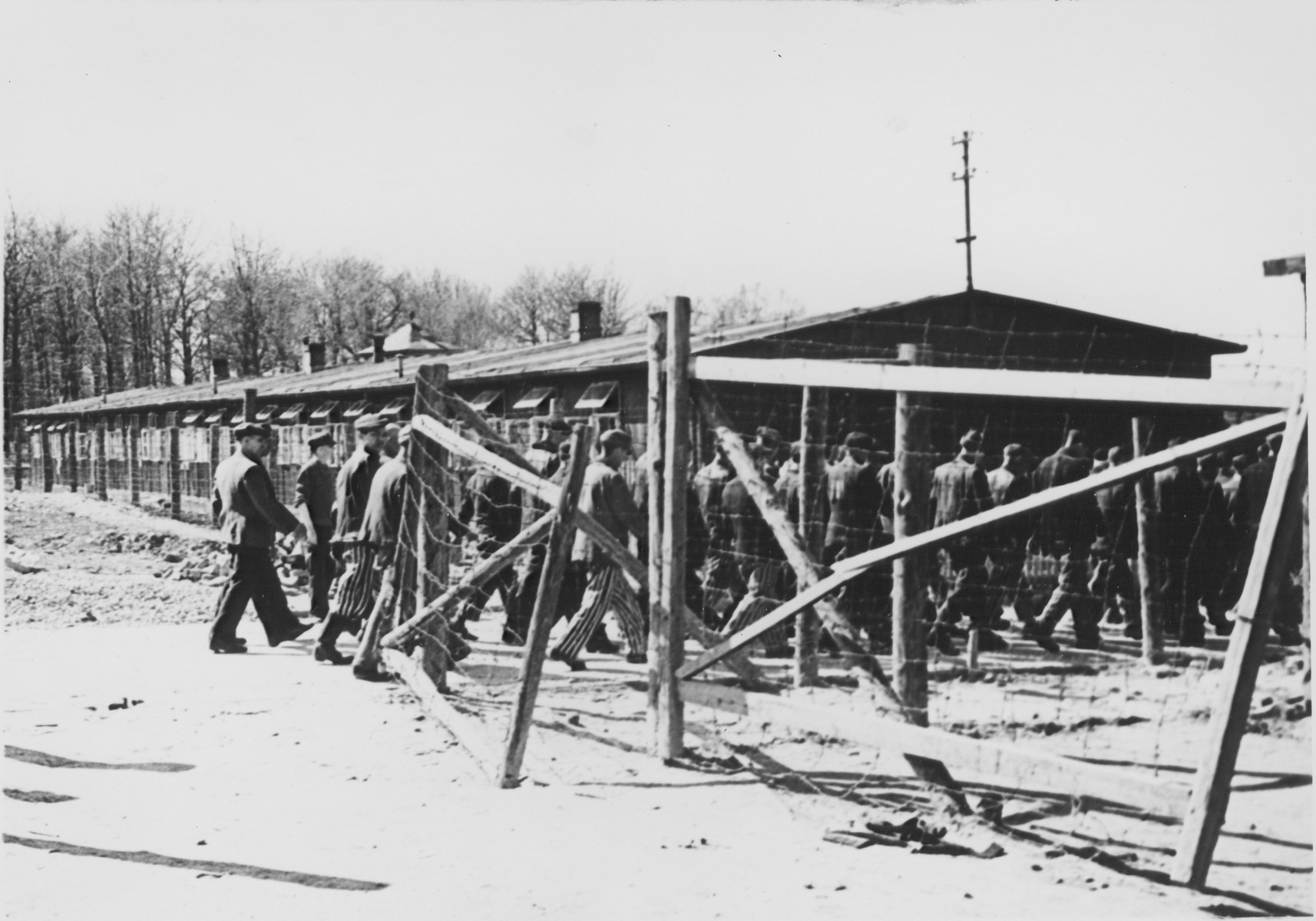 A column of survivors in concentration camp uniform walk through a gate in Buchenwald soon after the liberation.